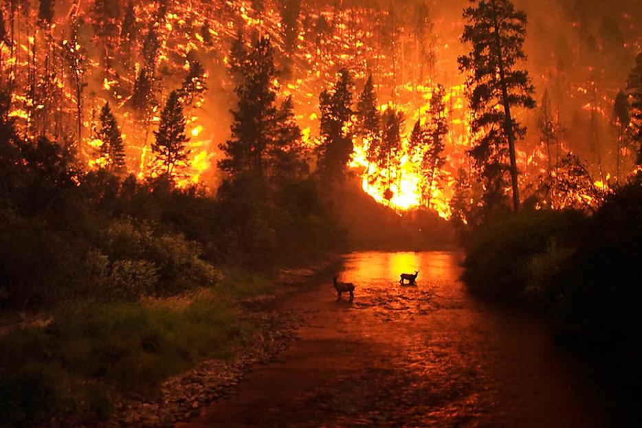 Image result for d'& burning forest