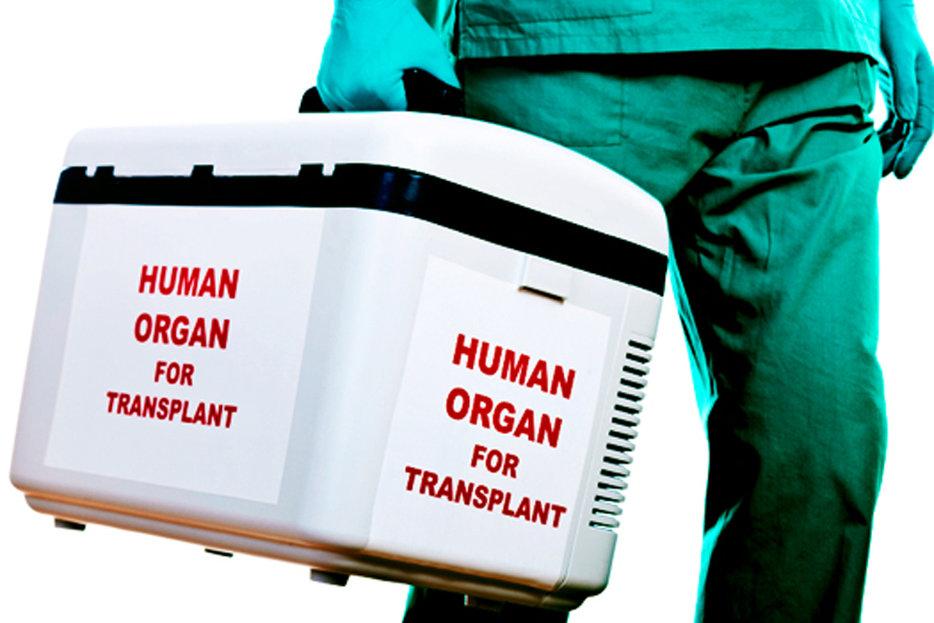 The Value of Your Internal Organs   Hazlitt