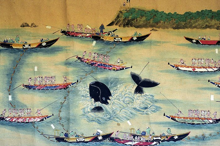 || A 19th century Japanese scroll depicting traditional whaling in Wakayama Prefecture.